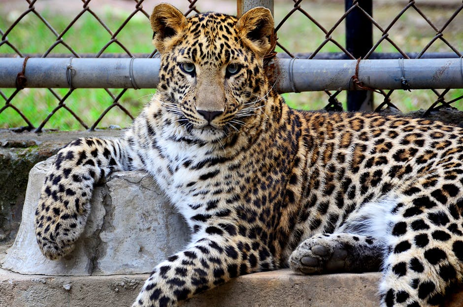 Lions and Tigers and Bears, Oh My! What Will You See at the Lee Richardson Zoo?